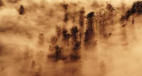 Morning Mist, Florentine Valley
