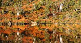 FAGUS REFLECTIONS, MOUNT FIELD