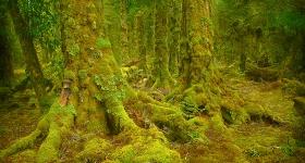 Myrtle Rain Forest, Rattler Range