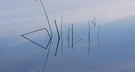 Reed reflection, Lake Gordon