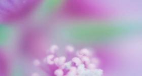 PINK FLOWER 6