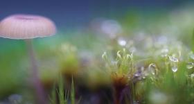 Mushroom and Moss, Weld Valley