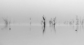 Ghost Trees, Lake St Clair