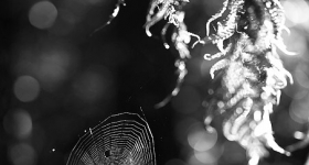 FERNS AND SPIDERS WEB