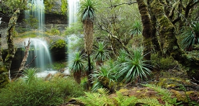 WATERFALL VALLEY, CRADLE MOUNTAIN
