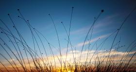BUTTON GRASS AT SUNSET
