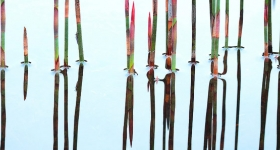 REED REFLECTION
