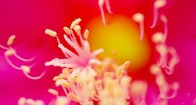 Pink Extravaganza