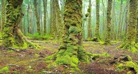 Rainforest, Rattler Range