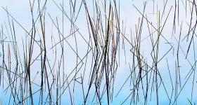 Reflected Reeds, Lake Pedder